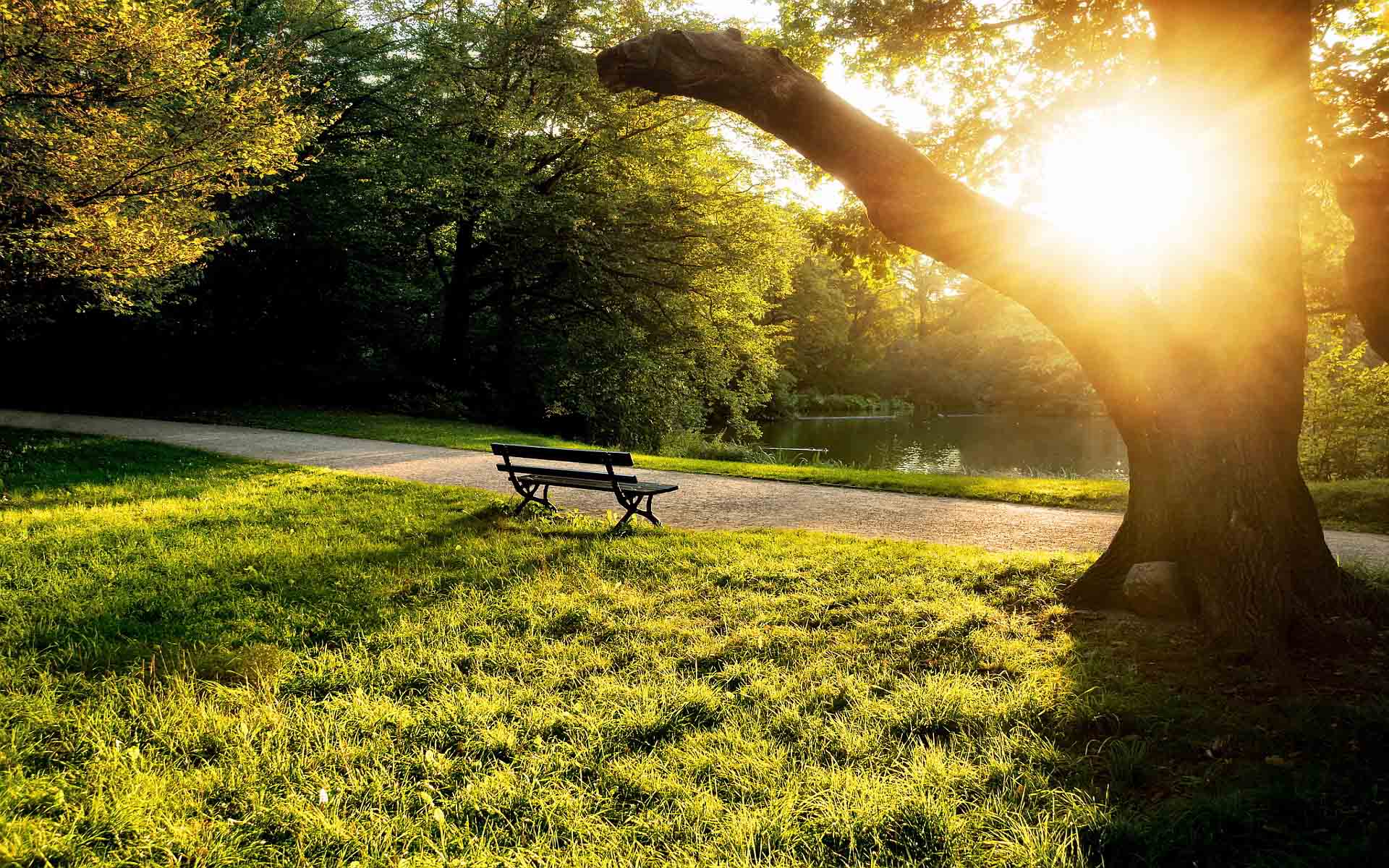 7025796-city-park-bench-sunset-1